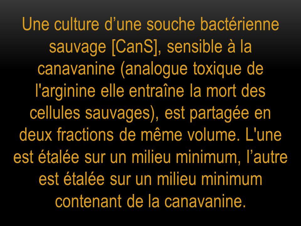 Une culture d'une souche bactérienne sauvage [CanS], sensible à la canavanine (analogue toxique de l arginine elle entraîne la mort des cellules sauvages), est partagée en deux fractions de même volume.